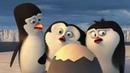 Пингвины из Мадагаскара рождение рядового