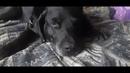 музейпса жил был пёс Лео ЛРК в музей Лабрадор Рей моя жизнь кино YouTube Leo Ridge