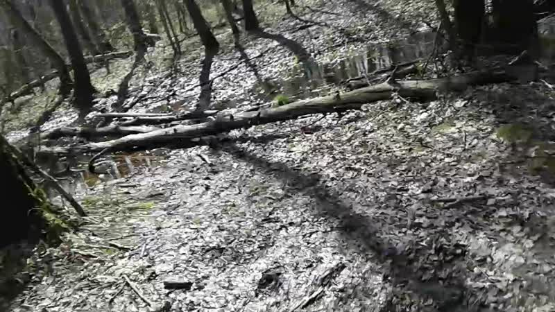Ромашковские грязи 2017