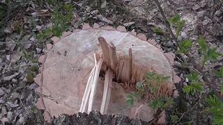Уничтожение парка в Энгельсе  тихой сапой продолжается. . Саратов
