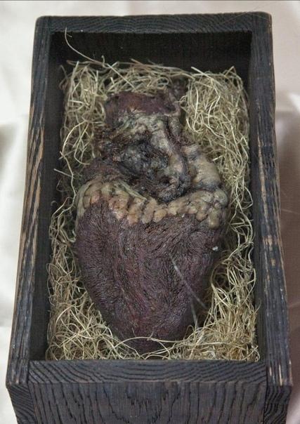 Уникальная находка - сердце норвежского гиганта в деревянном ларце 5 века Когда Ларс посещал имущество своего дедушки в 1937 году, он обнаружил загадочную деревянную коробочку с ужасным