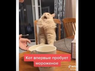 Кот пробует мороженое 😃