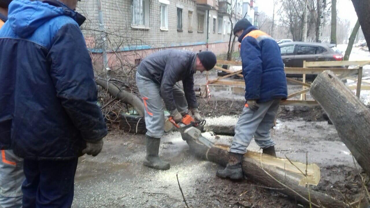Улица Широнинцев дом 17. Снос аварийного дерева.