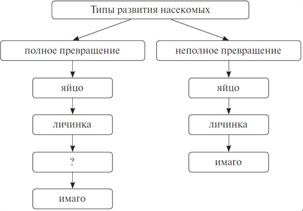 Этапы постэмбрионального развития насекомых.
