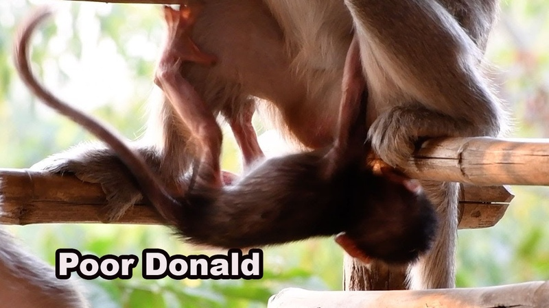 Very Pity Lack Milk Baby Donald Always Trying To Request Milk Adorable Wildlife 2020