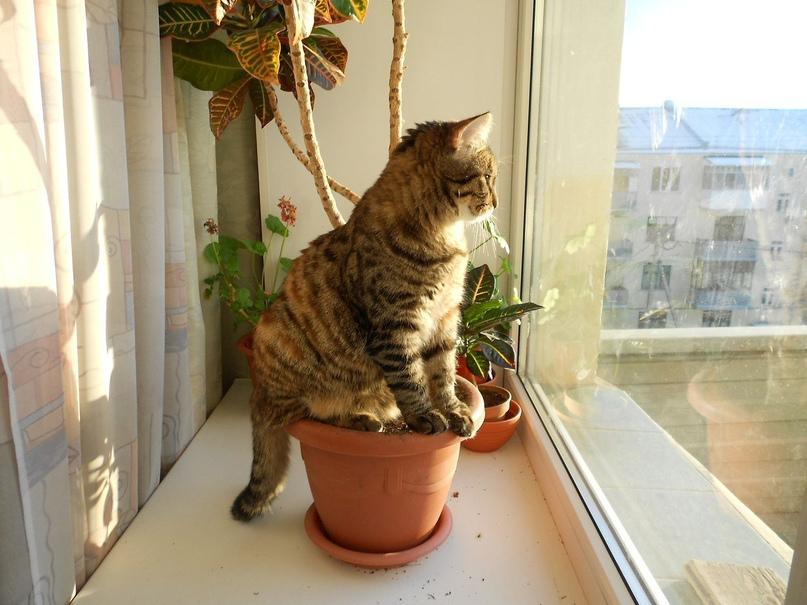 Кошачья угроза – спасаем цветы на подоконнике, изображение №1