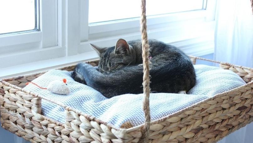 Кошачья угроза – спасаем цветы на подоконнике, изображение №4