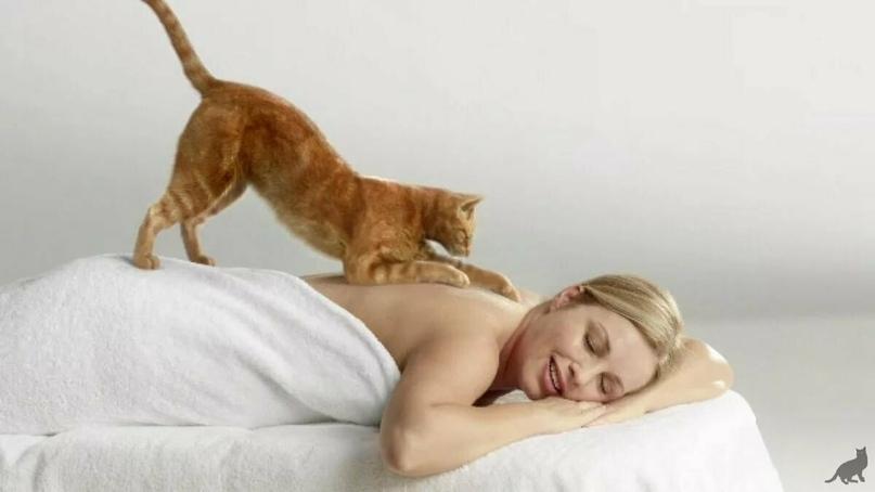 Кошачий «массаж». Почему коты любят топтать лапками?, изображение №1