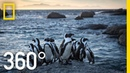 Endangered Penguins of South Africa 360 National Geographic