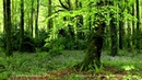 8 Hours Relaxing Nature Sounds for Studying Birdsong Relaxation Bird Singing