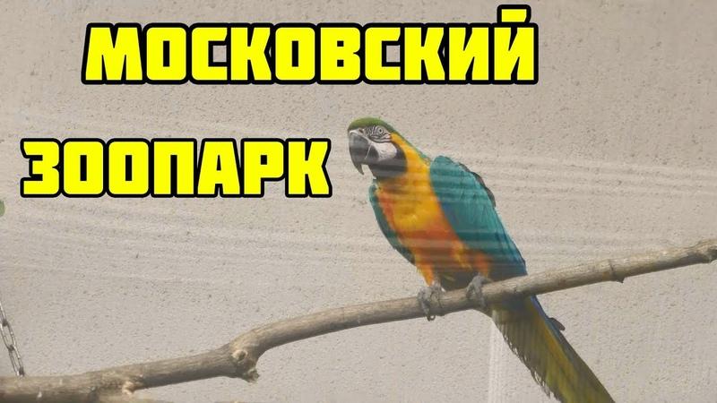 Московский зоопарк\\ Ленивые панды\\ Мудрые слоны