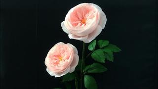 Bella's Craft/How to make David Austin rose bt crepe paper/Hướng dẫn làm hoa hồng anh bằng giấy nhún