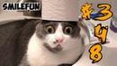 КОШКИ 2020 ПРИКОЛЫ с котами и кошками 2020 Смешные Коты Funny Cats
