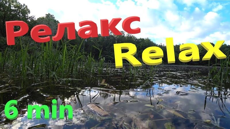 Релакс Пение птиц Пруд Природа Relax