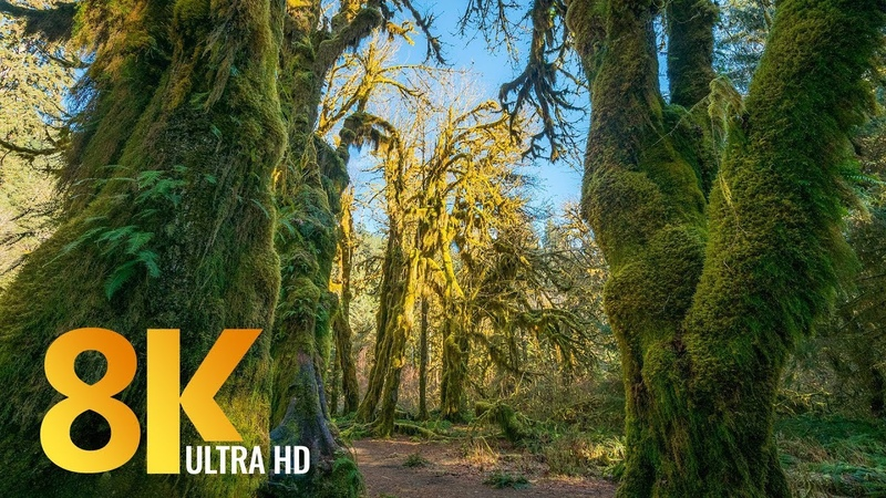 8K Virtual Hike along the Hall of Mosses and Spruce Nature Trails - Short Preview Video