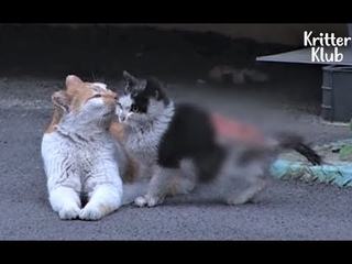 Cat Became A Mother To A Severely Wounded Kitten Who Lost His Mom Animal in Crisis EP107