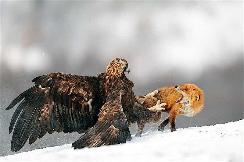 Красота дикой природы, изображение №1