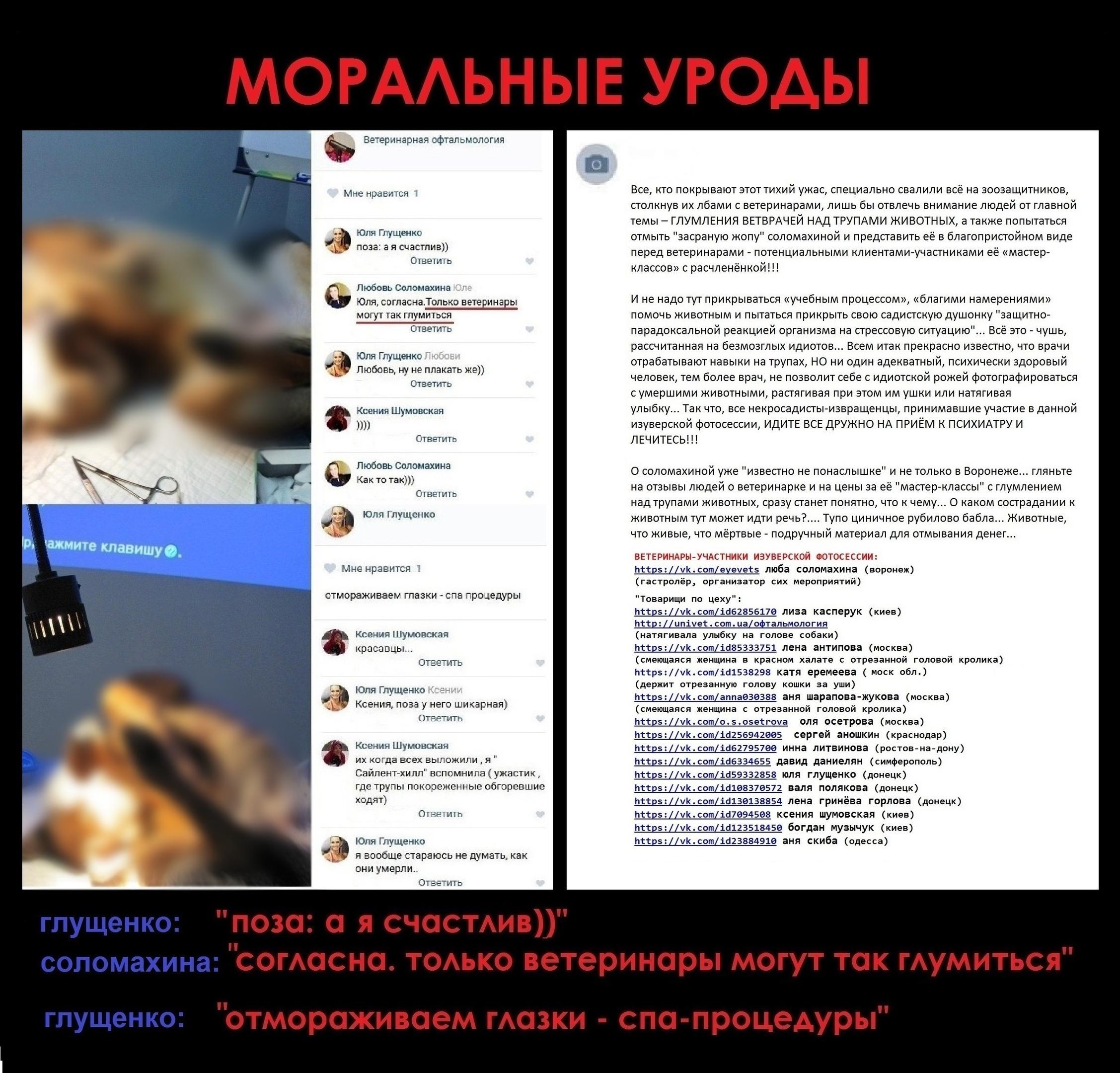 18+ ВЕТЕРИНАРА-ОФТАЛЬМОЛОГА Л.СОЛОМАХИНУ (г.ВОРОНЕЖ)— ОБХОДИТЬ СТОРОНОЙ!!!, изображение №17