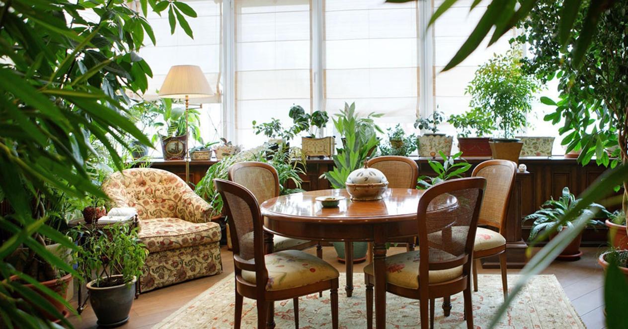 Самые красивые комнатные растения, которым нужно мало света