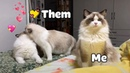 Me In Valentine's Day🐱 Funny Dogs And Cats Video 2020 | Tricksy Pets