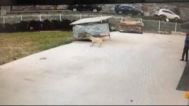 В Бельцах собака летает вместе с будкой