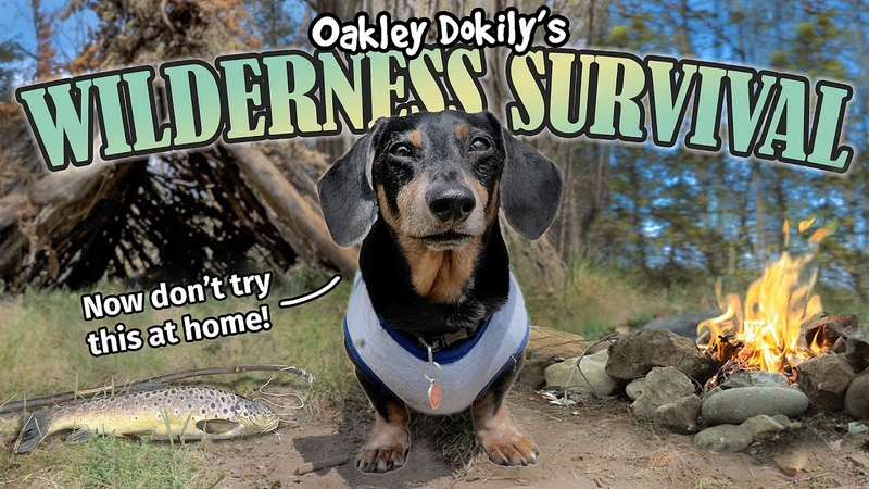 Oakley Survives in the Wilderness Funny Wiener Dog Survival Show