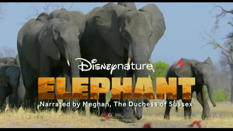 Elephant narrated by Meghan The Duchess of Sussex