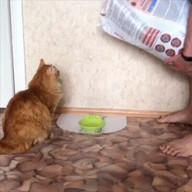 id_27907 Когда кот слишком часто просит жрать 😁  #gif@bon