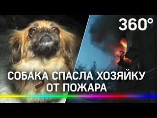 Пёс Моня спас бабушку на пожаре. Хозяйка не почувствовала дым – собака позвала пожарных
