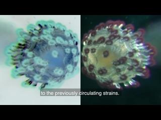 COVID-19 virus variants and transmission