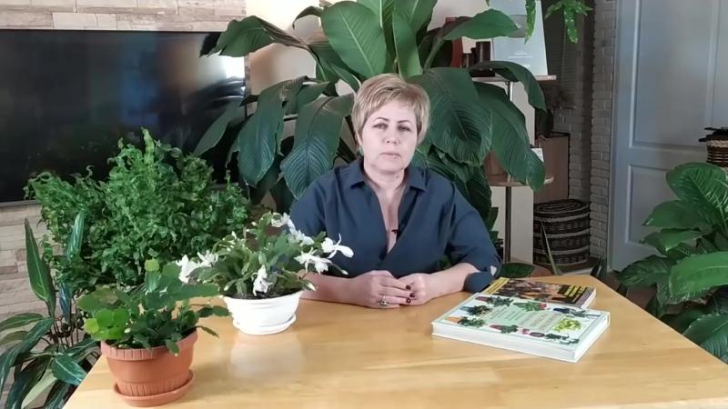 ДЕКАБРИСТ ЗАЦВЕТЁТ 100%, ЕСЛИ ВЫ БУДЕТЕ СЛЕДОВАТЬ ИНСТРУКЦИИ - Садовый гид.