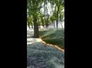 Semente poplar queimando acima da grama na espanha