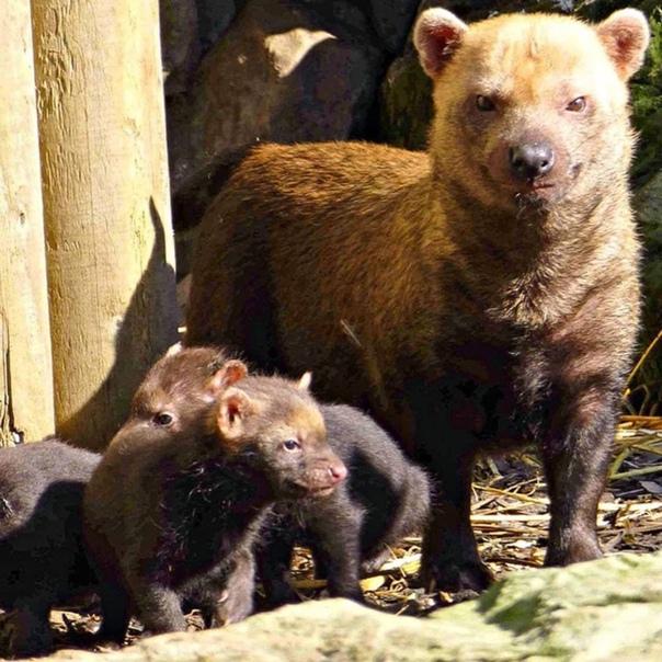 Московский зоопарк в честь Дня отца опубликовал сн...