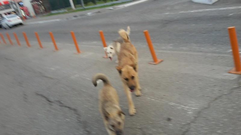 банда собак из Астрахани😂