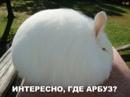 Личный фотоальбом Дианы Сикуновой