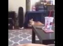 кот срёт на кровать