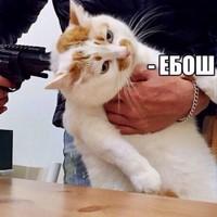 ДмитрийШевцов