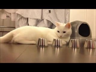 Кручу верчу, кота запутать хочу  ..
