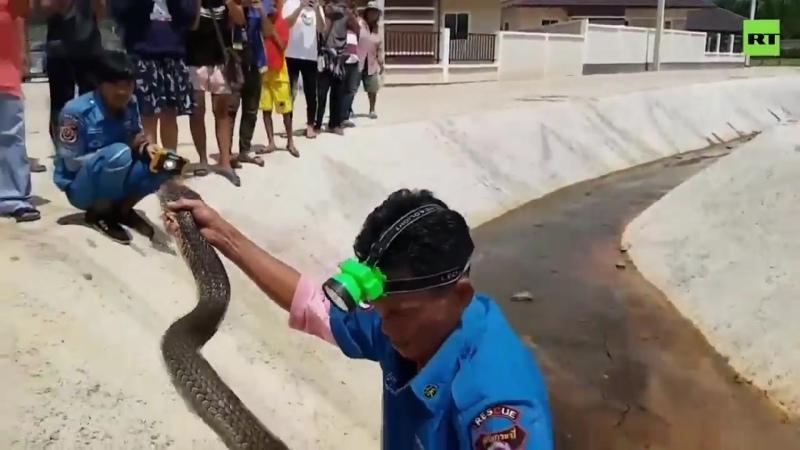 Таиландские спасатели выловили в канализации четырёхметровую змею