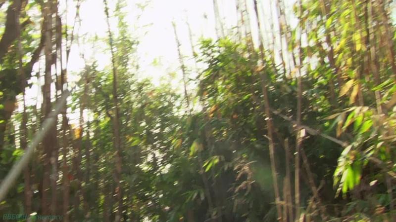 BBC Экспедиция в Бирму 2 В поисках редких животных Познавательный природа животные 2013