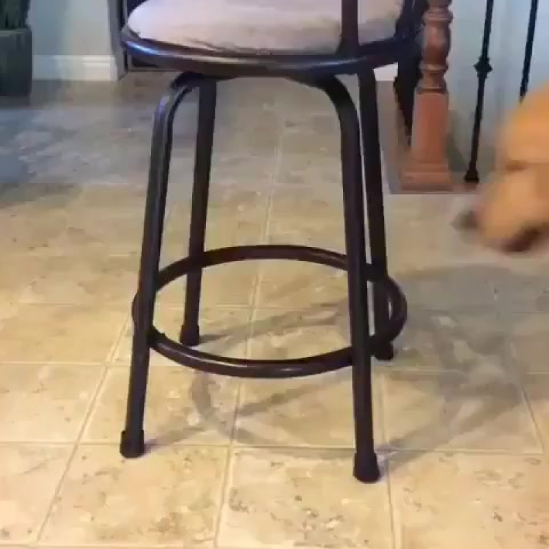 If it fits, I sits - - arlen_in_training.mp4