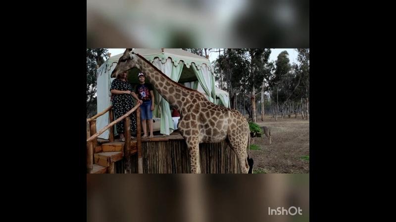 Южная Африка Зимбабве Хараре питомник