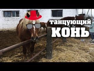 Танцующий конь приглашает на прогулку