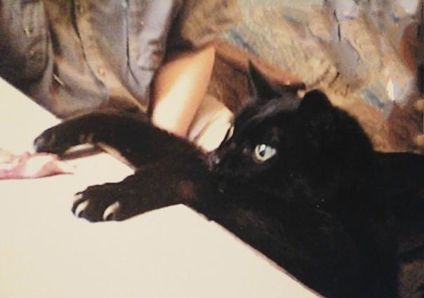 Патриарх Мой кот Кузя прожил 25 лет. В сытой разгульной молодости его вес доходил до 14 кг. Он обладал крутым нравом и все всегда решал сам. Взять на руки и погладить Попробуйте проделать это с