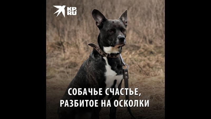 Собачье счастье разбитое на осколки