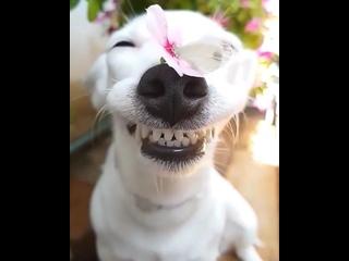 Какой довольный собакен😍 Такой искренней улыбке любой поз...