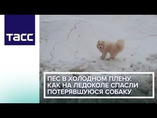 Пес в холодном плену. Как на ледоколе спасли потерявшуюся собаку