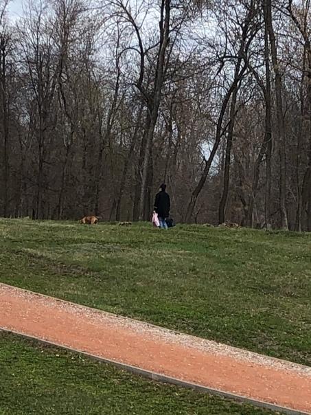 Здравствуйте! Анонимно пожалуйста. Сегодня видела, как женщина зашла в парк...