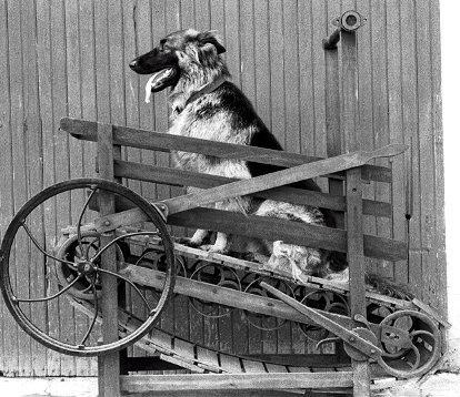 Двигатели мощностью в 1 собачью силу