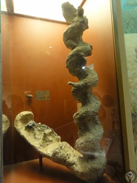 Тайна «дьявольских штопоров» В 1892 году американский палеонтолог Эрвин Барбур, исследовавший миоценовые песчаники формации Гаррисон в северо-западной части штата Небраска, наткнулся на нечто